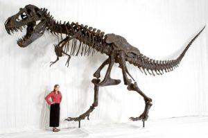 """Tyrannosaurus rex """"SUE"""" won in her day in court."""
